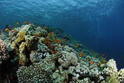 IUCN-Med Flashnews